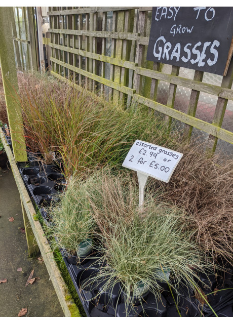 Mixed Grasses from £3.99